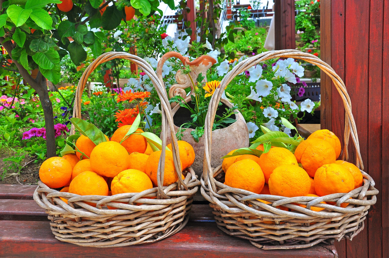 Τα φρούτα και λαχανικά του μήνα: Νοέμβριος
