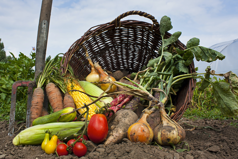Φρούτα και λαχανικά του μήνα: Ιούνιος