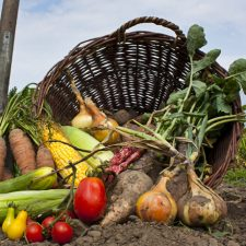 Fruits and Vegetables of the Month: June